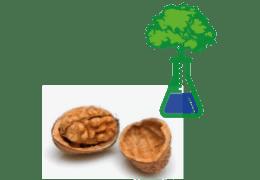 Ceviz Besin Değerleri  Nedir ? ve Ceviz deki Vitaminler Nelerdir ?